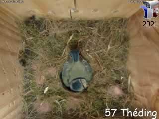 Le nid de mésange bleue en direct - via france-webcams.com