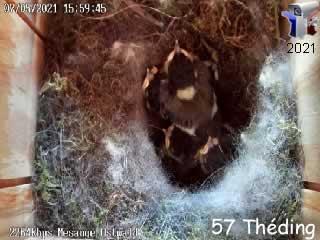 Le nid N°2 de mésange charbonnière cam 1 - via france-webcams.com