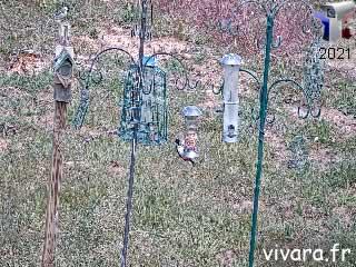 Postes de Nourrisage Vivara - via france-webcams.com