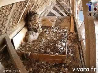Webcam 1 sur le nid de grand-duc d'Europe - via france-webcams.com