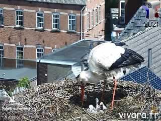Webcam des cigognes - Vivara - via france-webcams.com