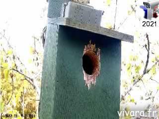 Webcam mésange charbonnière extérieur du nid - via france-webcams.com